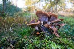 Gruppo di funghi immagine stock