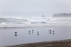 Gruppo di gabbiani al parco nazionale di Chiloe. Fotografia Stock