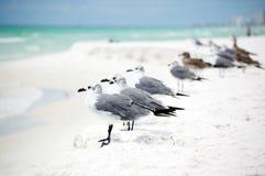 Gruppo di gabbiani che si levano in piedi in una riga sul seashor Immagine Stock