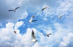 Gruppo di gabbiani di mare Fotografia Stock Libera da Diritti