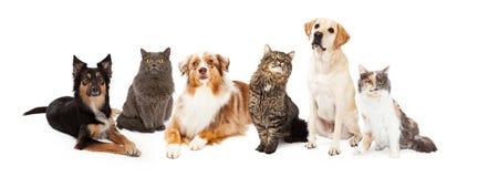 Gruppo di gatti e di cani Immagine Stock