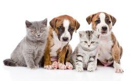 Gruppo di gatti e di cani che si siedono nella parte anteriore Isolato Fotografie Stock Libere da Diritti