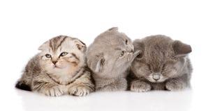 Gruppo di gattini sonnolenti del bambino Isolato su priorità bassa bianca Fotografie Stock
