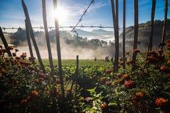 Gruppo di gente turistica che gode dell'alba sull'azienda agricola di agricoltura di Immagini Stock