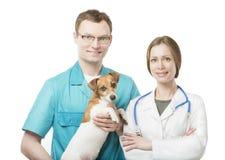 Gruppo di giovani bei veterinari fotografia stock libera da diritti