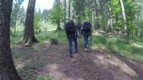 Gruppo di giovani ed in buona salute che fanno un'escursione attraverso il legno - video d archivio