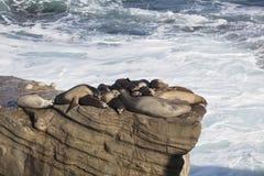 Gruppo di guarnizioni che riposano su una scogliera Fotografia Stock Libera da Diritti