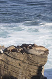 Gruppo di guarnizioni che riposano su una scogliera Fotografia Stock
