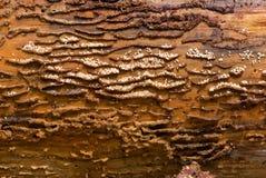 Gruppo di lavoro delle formiche. Fotografie Stock