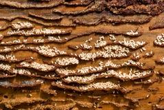 Gruppo di lavoro delle formiche. Fotografia Stock Libera da Diritti