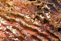 Gruppo di lavoro delle formiche. Immagini Stock Libere da Diritti