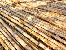 Gruppo di legname Fotografia Stock Libera da Diritti
