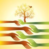 Gruppo di mani con l'albero, concetto di accordo di affari Fotografie Stock Libere da Diritti