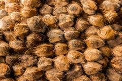 Gruppo di noci di cocco Immagini Stock