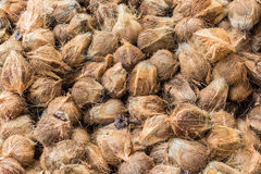 Gruppo di noci di cocco Immagini Stock Libere da Diritti