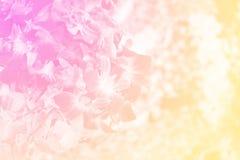 Gruppo di orchidea del dendrobium nel colore morbido fotografie stock libere da diritti