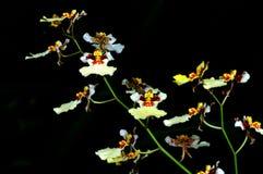 Gruppo di orchidee bianche Fotografie Stock Libere da Diritti