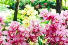 Gruppo di orchidee rosa Fotografie Stock Libere da Diritti