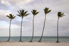 Gruppo di palma sulla spiaggia nella Repubblica dominicana fotografie stock