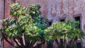 Gruppo di palme Immagine Stock Libera da Diritti