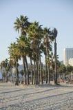 Gruppo di palme fotografia stock