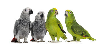 Gruppo di pappagalli Fotografie Stock Libere da Diritti