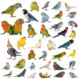 Gruppo di pappagalli fotografia stock libera da diritti