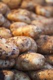 Gruppo di patate Fotografia Stock