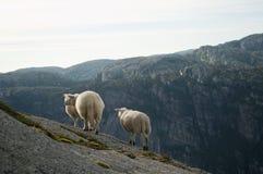 Gruppo di pecore bianche Immagini Stock