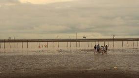 Gruppo di persone che camminano sulla spiaggia archivi video