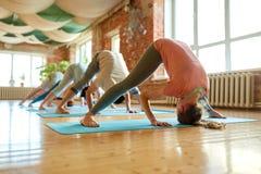 Gruppo di persone che fanno posa del cane di yoga allo studio Fotografia Stock