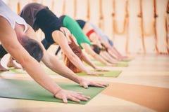 Gruppo di persone che fanno posa orientata verso il basso del cane di yoga sulle stuoie allo studio Fotografia Stock