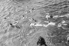 Gruppo di persone che nuotano underwater in Hurghada, Egitto Immagini Stock