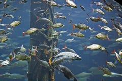 Gruppo di pesci immagini stock libere da diritti