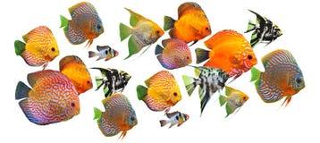 Gruppo di pesci fotografia stock libera da diritti