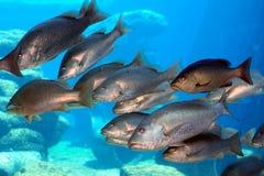 Gruppo di pesci Immagine Stock