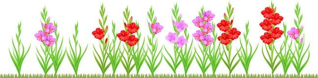 Gruppo di pianta di fioritura di gladiolo con i fiori dei colori differenti illustrazione vettoriale
