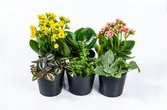 Gruppo di piante della casa su fondo bianco immagini stock