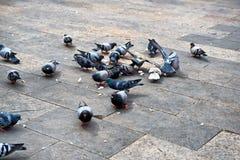 Gruppo di piccioni che mangiano pane rimanente Fotografia Stock