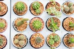 Gruppo di piccola pianta del cactus nel vaso al giardino del cactus thailand Immagini Stock Libere da Diritti