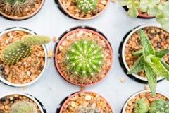 Gruppo di piccola pianta del cactus nel vaso al giardino del cactus thailand Fotografia Stock