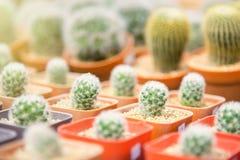 Gruppo di piccola pianta del cactus nel vaso al giardino del cactus thailand Fotografia Stock Libera da Diritti