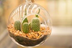 Gruppo di piccola pianta del cactus nel vaso al giardino del cactus thailand Immagini Stock
