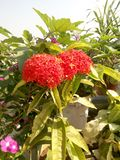 Gruppo di piccoli fiori fotografia stock