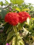 Gruppo di piccoli fiori immagine stock