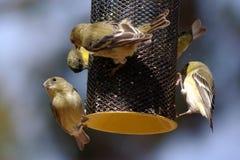 Gruppo di piccoli uccelli su un alimentatore fotografia stock