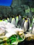 Gruppo di pinguini del re Immagini Stock