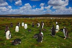 Gruppo di pinguini di re nell'erba verde Pinguini di Gentoo con cielo blu con le nuvole bianche Pinguini nell'habitat della natur Immagini Stock Libere da Diritti