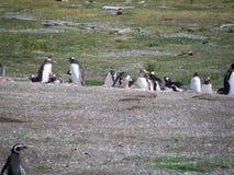 Gruppo di pinguino che riposa e che gioca immagine stock