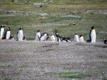 Gruppo di pinguino che riposa e che gioca a Usuahia fotografie stock libere da diritti